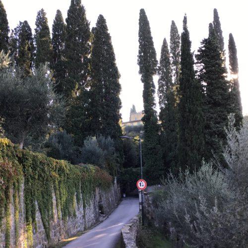 La raccolta delle olive del 2020